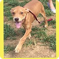 Adopt A Pet :: Mike Wazowski (Pom-js) - Washington, DC