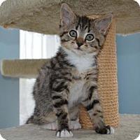 Adopt A Pet :: Emma - Merrifield, VA