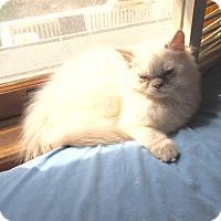 Adopt A Pet :: Bjorn - Hampton, VA