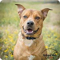 Adopt A Pet :: Baxter - Cheyenne, WY
