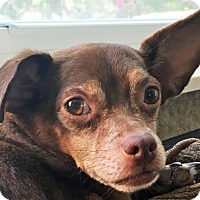 Adopt A Pet :: Porter - St Louis, MO