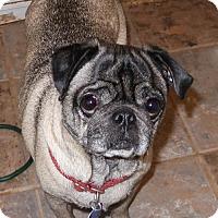 Adopt A Pet :: Duke - Burbank, OH