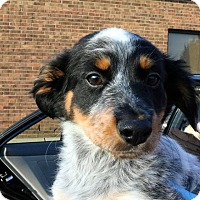 Adopt A Pet :: Jayden - Sugar Grove, IL
