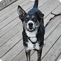 Adopt A Pet :: Merlin - Berea, OH