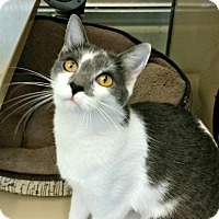 Adopt A Pet :: Eric - Chesapeake, VA
