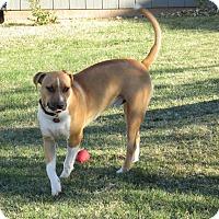 Adopt A Pet :: Chaac - Yukon, OK