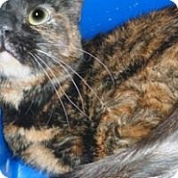 Adopt A Pet :: 333986 - Wildomar, CA