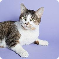 Adopt A Pet :: Sharon - Wheaton, IL
