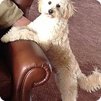 Adopt A Pet :: Rex - Nine Mile Falls, WA
