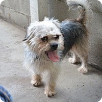 Adopt A Pet :: Benji - Sun Valley, CA