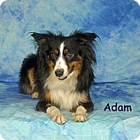Adopt A Pet :: Adam - Ft. Myers, FL