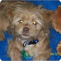 Adopt A Pet :: Artie - Richmond, VA