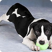 Adopt A Pet :: Duke(ADOPTED!) - Chicago, IL