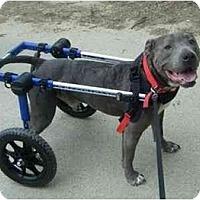 Adopt A Pet :: Fandango - Raymond, NH