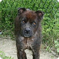 Adopt A Pet :: Scotty - Houston, TX