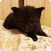Adopt A Pet :: Zack - Putnam, CT