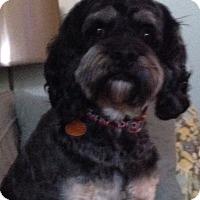 Adopt A Pet :: Bryce -Adopted! - Kannapolis, NC