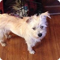 Adopt A Pet :: Jackson - Westport, CT
