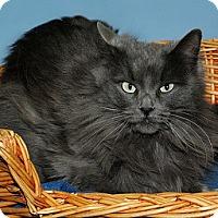 Adopt A Pet :: Mia - Gatineau, QC