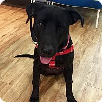 Adopt A Pet :: Joanne Froggatt - Jersey City, NJ