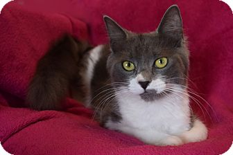 Domestic Longhair Cat for adoption in Winterville, North Carolina - HOLLY