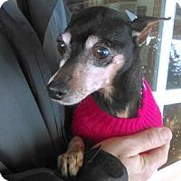 Adopt A Pet :: Rocky - Canterbury, CT