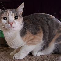 Adopt A Pet :: Roxy - Pasadena, CA