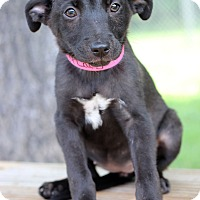Adopt A Pet :: Lexie - Waldorf, MD