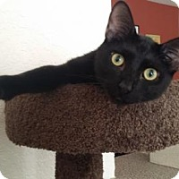 Adopt A Pet :: Batman - Apopka, FL