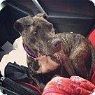 Adopt A Pet :: WENDY
