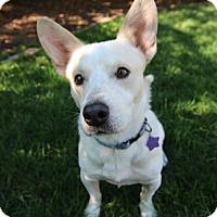 Adopt A Pet :: McTavish - Littleton, CO