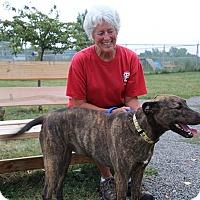 Adopt A Pet :: June - Elyria, OH