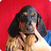 Adopt A Pet :: Blossom - Oviedo, FL