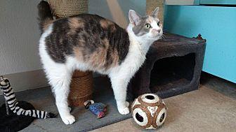 Domestic Shorthair Cat for adoption in Hanna City, Illinois - Lebie