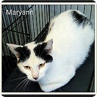 Adopt A Pet :: MARYANN - muskogee, OK