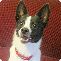 Adopt A Pet :: Hopi (GA) - Atlanta, GA