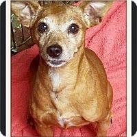 Adopt A Pet :: Candi - Kenosha, WI