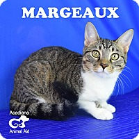 Adopt A Pet :: Margeaux - Carencro, LA