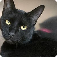 Adopt A Pet :: Blackie - Philadelphia, PA