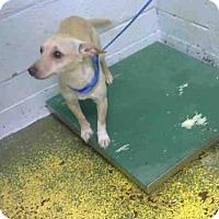 Adopt A Pet :: JASMINE - Atlanta, GA