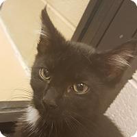 Adopt A Pet :: Cassandra - Gadsden, AL