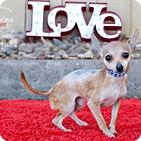 Adopt A Pet :: Princessa - Shawnee Mission, KS