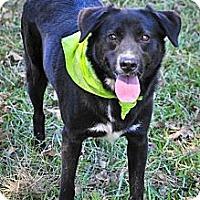 Labrador Retriever Mix Dog for adoption in Jackson, Mississippi - Greta