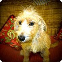 Adopt A Pet :: Hannah - Gadsden, AL