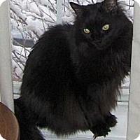 Adopt A Pet :: Mouse - Reston, VA