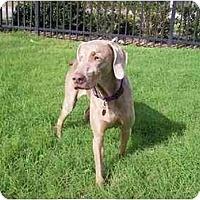 Adopt A Pet :: Chloe - Eustis, FL