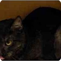 Adopt A Pet :: Ashlee - Irvine, CA