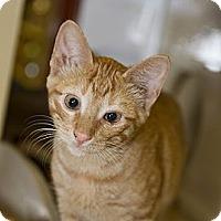 Adopt A Pet :: Odie - Farmingdale, NY