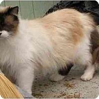 Adopt A Pet :: Etienne - Davis, CA