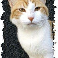 Adopt A Pet :: John - Mobile, AL